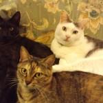 ウチの猫達紹介
