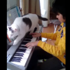 猫とピアノ 楽器演奏者に「かまってチャン」なネコはある意味「#あるある」なのか?集