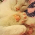 猫の肉球がたまらなくスキで発見した「こちょこちょ」すると「ぱぁ」する現象